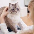 猫が皮膚がんになった時の症状や治療の方法