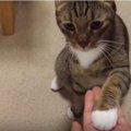 お手、おかわりが出来る猫?!