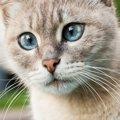 猫の鼻くその取り方、考えられる原因や病名