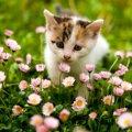 春に見られる猫の8つの変化