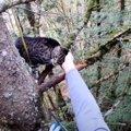 猫がモミの木でSOSの鳴き声…難航する救助を経て飼い主の元へ