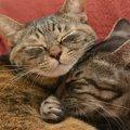 臆病で懐かなかった猫が引越しを期に変わった3つの事