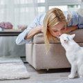 猫が飼い主に鼻先を『チョン』とくっつけてくる時の心理4つ