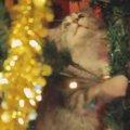 「クリスマスツリー?木には違いないニャ!」子猫、聖夜に木登り!