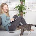 いろんな部屋をウロウロ移動する猫の心理5つ
