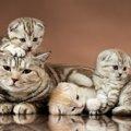 猫の去勢手術の基礎知識!メリットや適切な時期、費用の相場から方法…