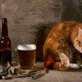 猫に安易にビールを飲ませてはいけない!死に至る危険性も