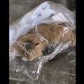 イタズラの現行犯!捕まった猫さんがツイッターで波紋を呼ぶ
