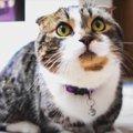 まだまだ若い♪ケンカも遊びも頑張る11歳の猫さん!