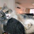 【家族に迎える選択肢のひとつに】「保護猫カフェ マンチカン」さんに…
