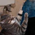 猫の爪とぎグッズお取替えの目安はいつ?