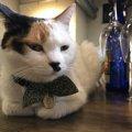 すべてのネコに愛を!猫がいるカフェ cafè Mo.free (カフェ モ フリー)