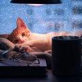 猫が寒さを感じた時の仕草とは