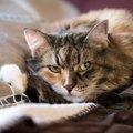 猫にとってストレスな『生活音』5選