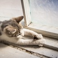 猫がセミを食べるのは大丈夫なのか その対処法とは