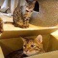 箱が大好きな猫さんたち!縦に置いても入りたい♡