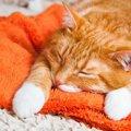 発症したら命を落とす怖い病気『FIP(猫伝染性腹膜炎)』とは