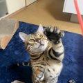 猫が興奮しているときの仕草や行動3つ