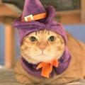 LAYLAの12猫占い【10/19~10/25】のあなたと猫ちゃんの運勢