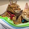 夫婦猫さんが久々にくっついている♡珍しいツーショットを激写!