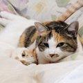猫が親離れする時期とその注意点について