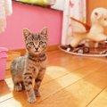 猫の留守番を監視カメラで見守ろう!おすすめ商品5選