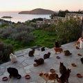 エーゲ海の美しい島に夫婦2人で作った猫の保護施設が話題に!