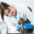 猫にステロイドを使った場合の効果と副作用について