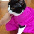 猫のおくるみ「保定袋」をジャケットで手作りしてみました!
