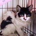 ビニールを食べて生き延びた猫…野良猫の厳しい生活環境とは?