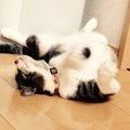猫が喜ぶ音とは?それを好む理由とおすすめのおもちゃ