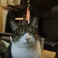 玉ねぎが目に沁みて涙目な猫・・・でも見てるとなんだか可愛い(笑)(m…