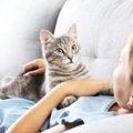 猫に好かれる人になるコツは?気まぐれ猫とラブラブになる為の7か条!
