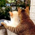 カップルか!猫の可愛すぎる『バックハグ』にTwitter民悶絶!