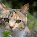 猫にミントは大丈夫?害のある物、安全な物
