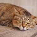猫の『弱ってるサイン』5選!食事やトイレの変化を見極めよう