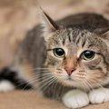 猫が『極度のストレス』をため込んでいる時のサイン4選!どうやって…