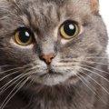 猫の名前が決まらない…そんな時参考にしたい4つの事