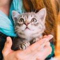 愛猫を失ってつらい…乗り越える方法は?