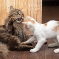 猫同士が喧嘩する理由3つ