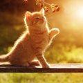 猫に好かれる方法とは?NG行動から実践まで!