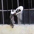 「今助けるニャ!」必死に子猫を助ける母猫!母の愛に感動しちゃいま…