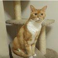雷に驚く猫たち ドーンにビクッ!が、かわいそうだけどかわいい♡