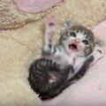 「お腹いっぱいでうれしいニャ」ご機嫌な子猫が可愛い♡