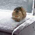 猫バンバンで防げる事故…対策できる事、車内で見つけた時の対処法