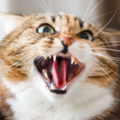 猫に嫌われる10つのNG行動と好かれる5つのコツ