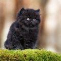 黒猫の品種14選それぞれの性格や特徴、飼い方について