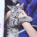 猫に腕枕をする時の4つのポイント