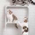 猫の棚を手作りしよう!必要なものと手順