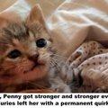 生存率が低い状態で発見された子猫は怪我の後遺症でいつも笑顔に?!